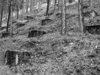 http://www.emd.tu-bs.de/files/gimgs/th-124_124_28grounding-relicts-in-the-hirschbachtal.jpg